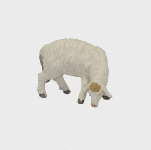 Zirbel 257 Schaf äsend rechtsschauend